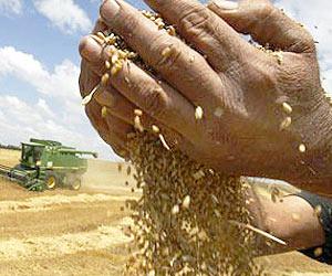 Cosecha, semilla, fruto, escurriendose entre las manos