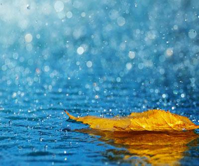 Lucia cardenas google - Agua de lluvia ...