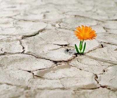 Flor creciendo en medio de un sequedal