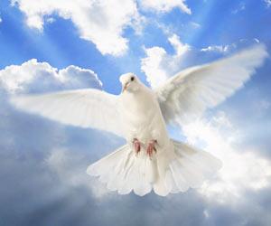 Paloma volando representativa del Espiritu Santo