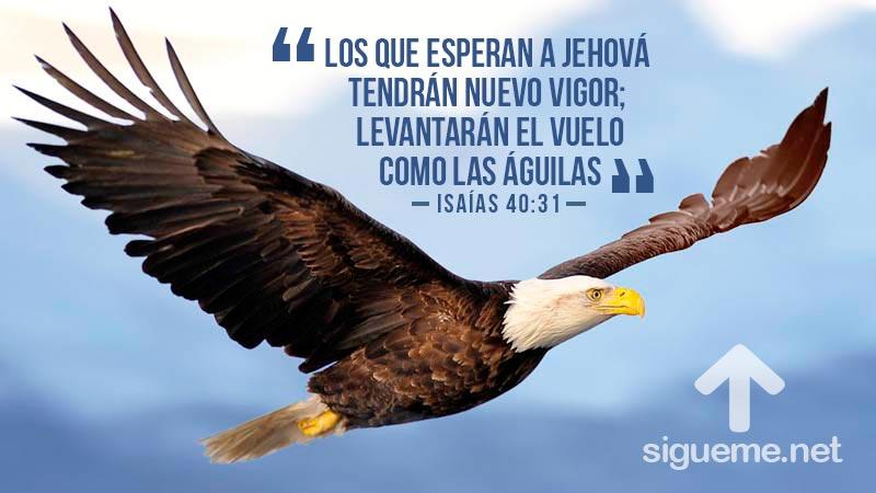 Aguila volando simbolo de andar cristiano