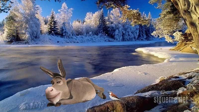 Burro o asno acostado sobre la nieve