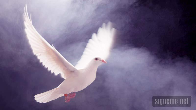 Paloma representativa del Espiritu santo