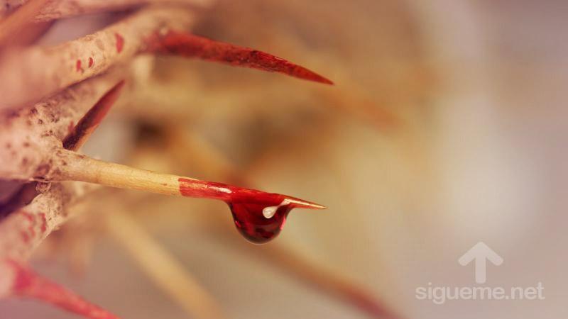 Sangre de Jesus en la Corona de espinas