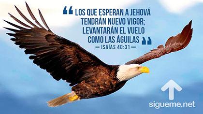 Aguila volando simbolo de andar cristian