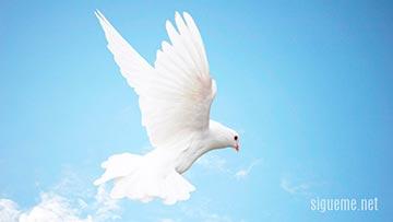 La presencia del Espiritu santo representada  por una paloma blanca