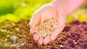 Mujer con semillas en su mano listas para ser sembradas