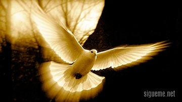 Paloma volando representando al Espiritu Santo