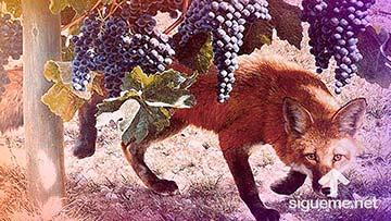 LAs zorras pequeñas que destruyen la viña